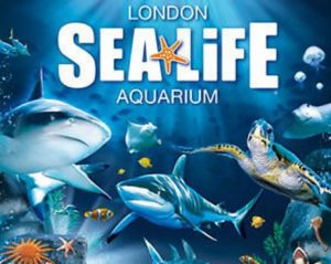 Contact Of Sea Life London Aquarium Phone Address Customer Care